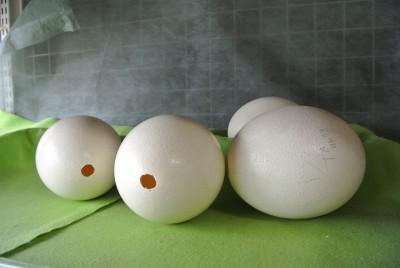 ダチョウの卵の殻