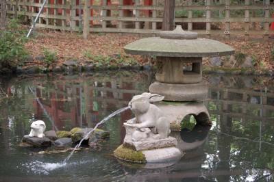 池のウサギ