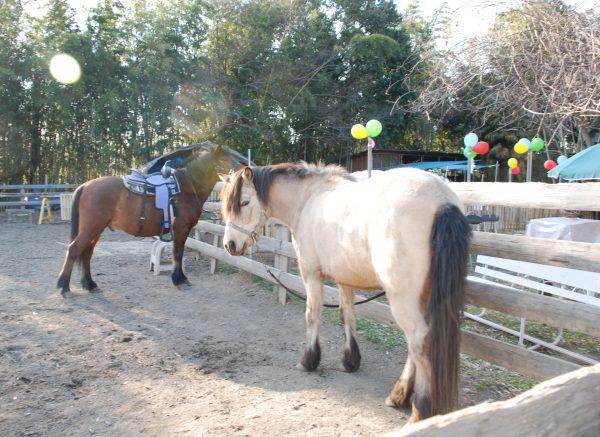 遊馬園の馬たち