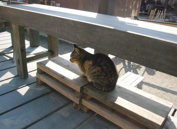 成勝園でみかけた猫