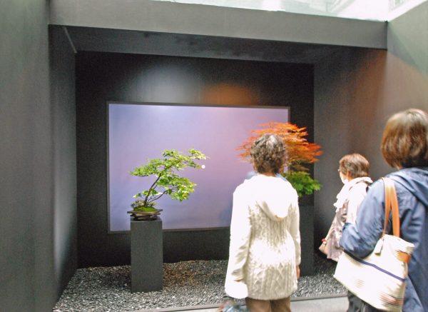 世界盆栽大会 彩花盆栽と写真のコラボレーション