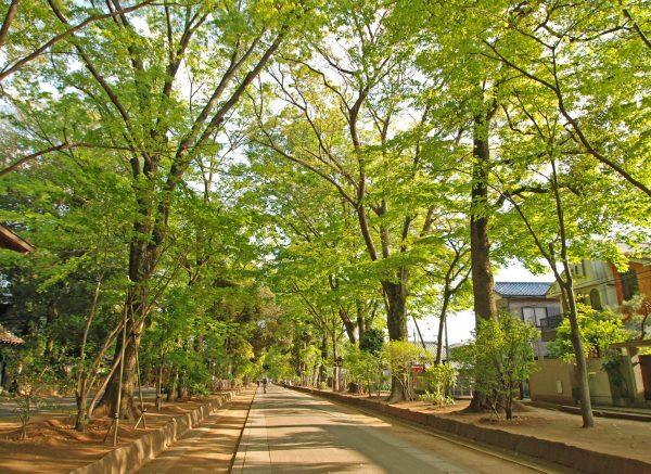 大宮氷川神社 参道の緑