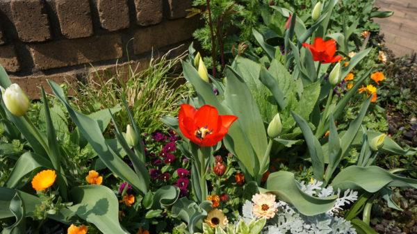 カフェmaru(マールーウ)の庭に咲いた花