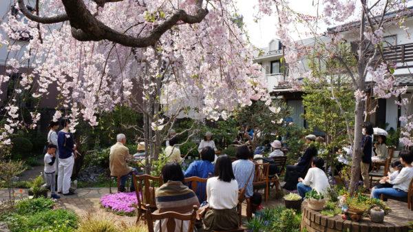 桜の下でコンサートを楽しむ観客